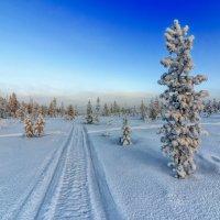 Лыжня :: олег
