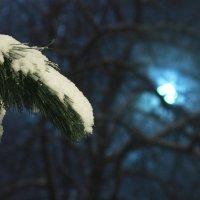 Сосна, фонарь и снег :: Юрий Гайворонский