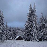 В темно-синем лесу :: tamara *****