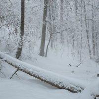 Снежный туман :: Ксения Соварцева