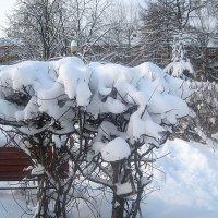 Зимний букет :: Елена Семигина