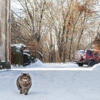 Всех найдут и приведут домой :: Ирина Данилова