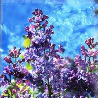 Весна.. :: Ирина Сивовол