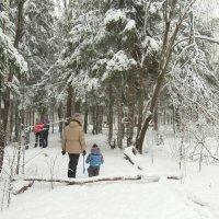 зимняя прогулка :: НАТАЛЬЯ