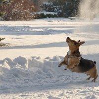 И где этот снежок? Что-то я его не вижу!? :: Елена Пономарева