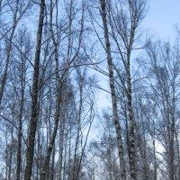 Январь в городском парке :: Маера Урусова