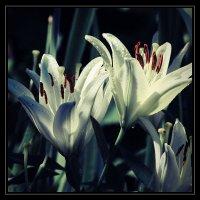 Летние цветы. :: Юрий Гуков