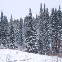 заснеженный лес :: vladimir polovnikov