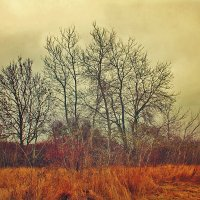 Южная зима :: Marika Hexe