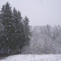 снегопад в апреле :: Анна Воробьева