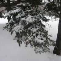 Зимний ажурный наряд! :: Надежда