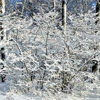 Зимние узоры природы. :: Михаил Столяров