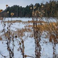 Зимние цветы :: Виктор