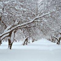 Яблоневый сад :: Денис Масленников