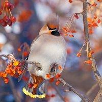 Гордый птах :: Анатолий Иргл