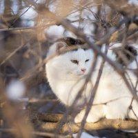 Дворовый кот :: Вера Сафонова