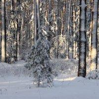 Всю ночь метелил снегопад... :: Лесо-Вед (Баранов)