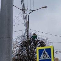 Вам чёлочку покороче? :: Игорь Николаев