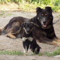 Отец и сын :: Alena Legotkina