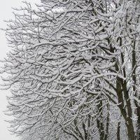 Снежный день :: Наталия Лыкова