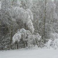 Под тяжестью мокрого снега :: Виктор (Victor)