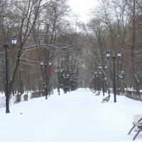 Заснеженный парк... :: Тамара (st.tamara)