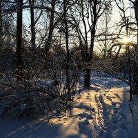 Зимний день :: Екатерина Булыгина