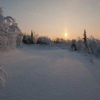 Тихо в лесу.... :: Олег Кулябин