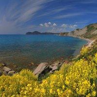 брега весны наполнены цветами :: viton