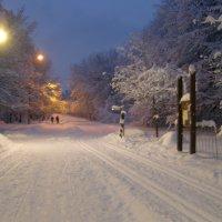 наконец-то пришла настоящая зима! :: Анна Воробьева