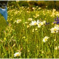 Времена года(Весна) :: irina Schwarzer