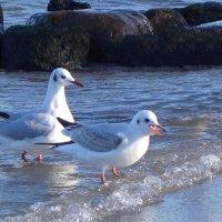 Солнечным февральским днём на море :: Маргарита Батырева