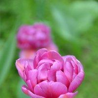 Цветок :: Ольга Беляева
