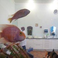 Что снится рыбкам?.. :: Алекс Аро Аро
