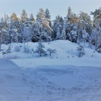 Снежный январь :: Swetlana V