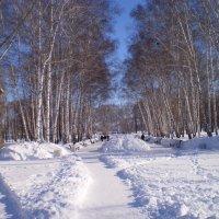 Мороз и солнце, день чудесный. :: венера чуйкова