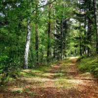 Лесными дорожками :: Александр