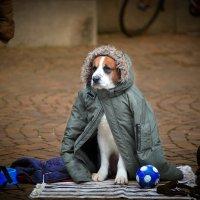 человек собаке друг :: Андрей Арнольд