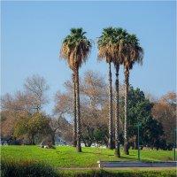 Осень в парке Яркон, Тель Авив, Израиль :: Борис Херсонский