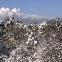 зима :: сергей коник