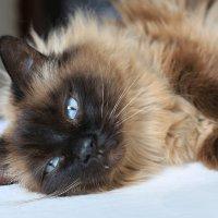 Котя :: ninell nikitina