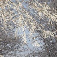 Зимушка-зима. :: нина