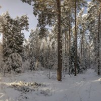 Лес, просто лес :: Mikhail .