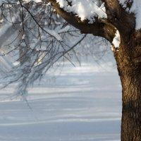 Мороз и солнце :: Марина Потапова