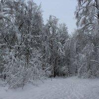 Снег :: Людмила Монахова
