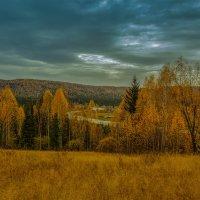 Золотые разливы сибирской тайги. :: Евгений Голубев