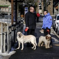 два собаковеда :: Александр Липовецкий