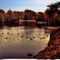 Осенние парки! :: Натали Пам