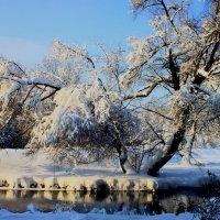 Красоты зимы :: олег свирский