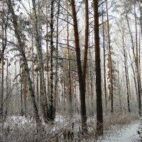 Зима в лесу :: Татьяна Котельникова